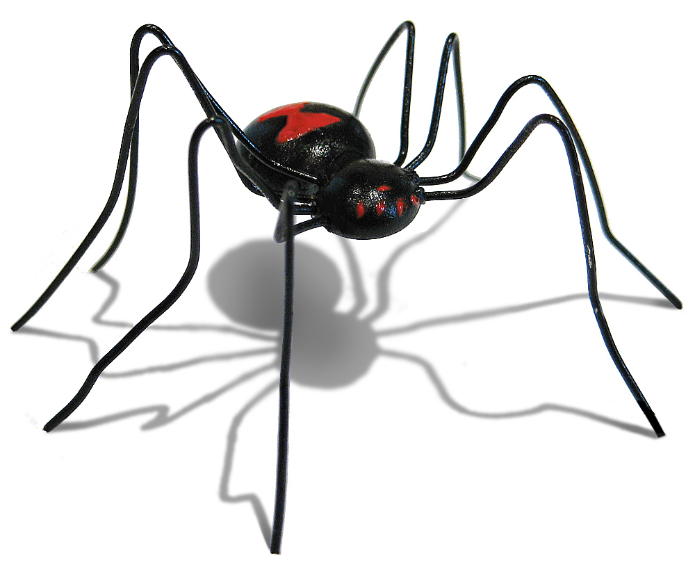 Glue gun bug, Spider